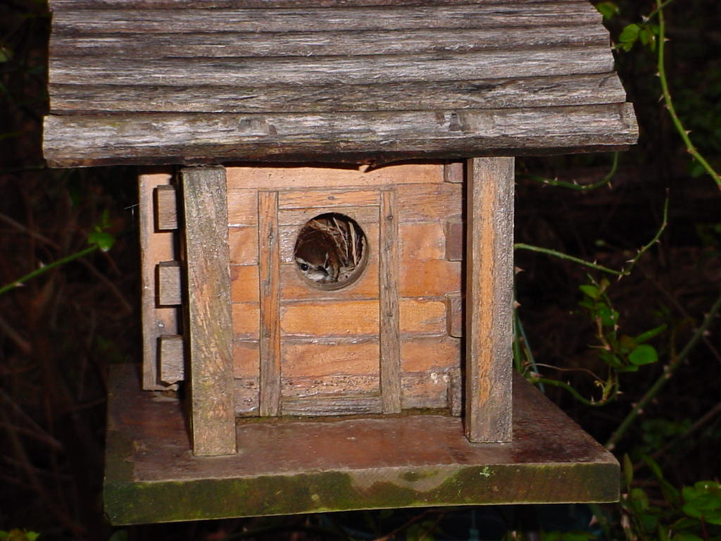 Bird on nest in birdhouse