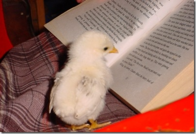 Chick Book aa
