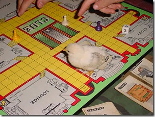 Chickee Clue