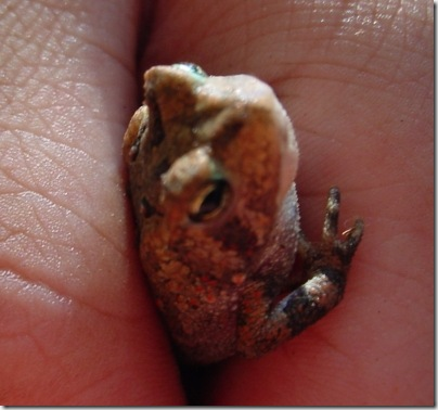 Teeny Tiny Toad 2