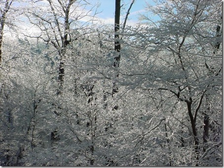 Sparkly Icy Trees